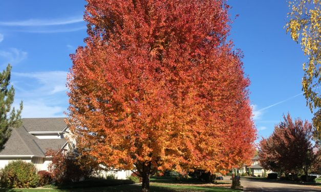 Saturday night links of fall